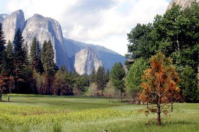 Yosemite National Park, Cathedral Rock