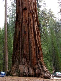 Yosemite national park sequoia